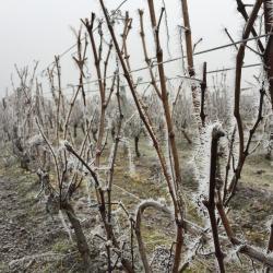 Les vignes se reposent en hiver