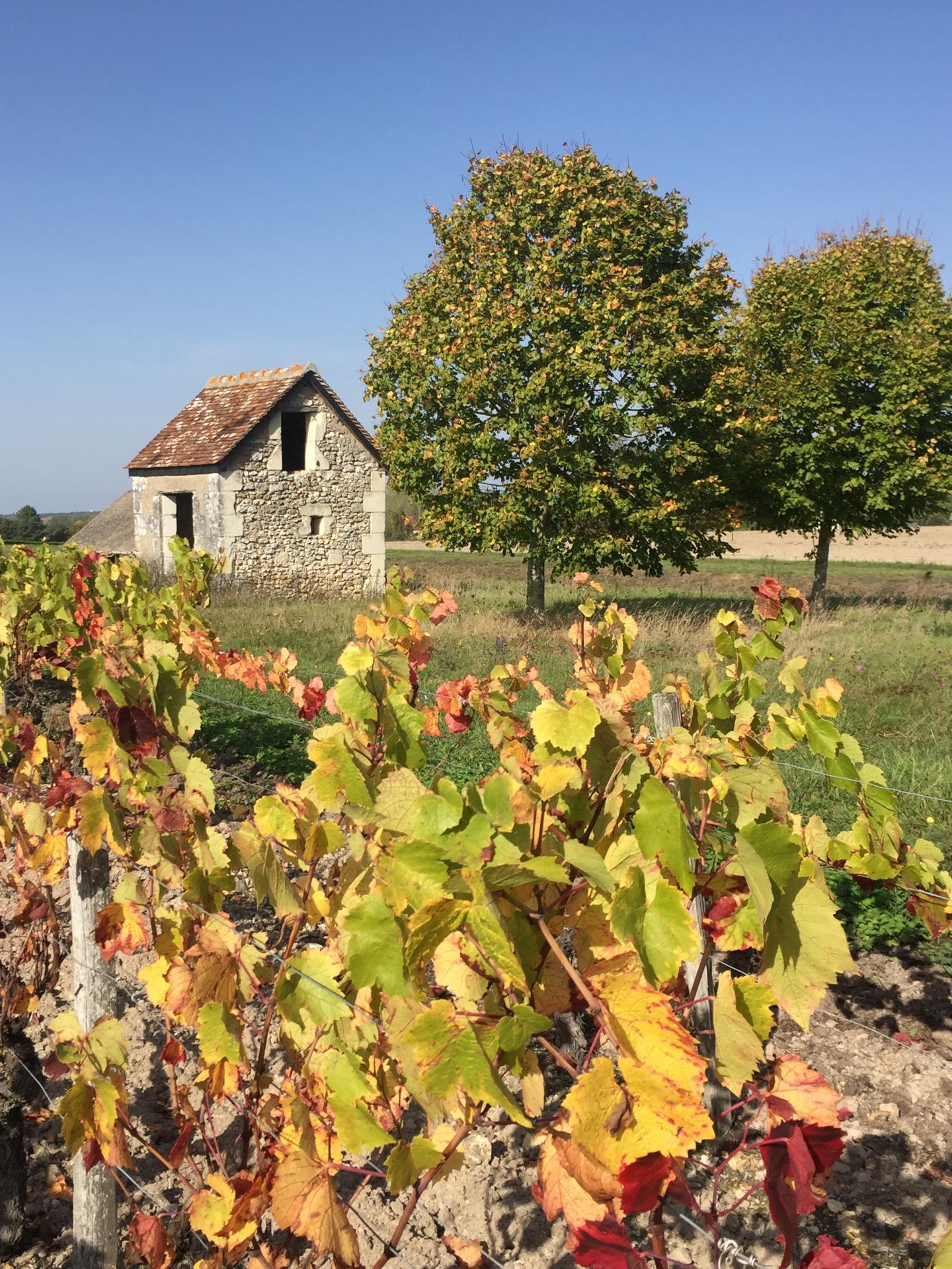 Maison de vigne