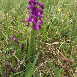 Une orchidée sur le plateau
